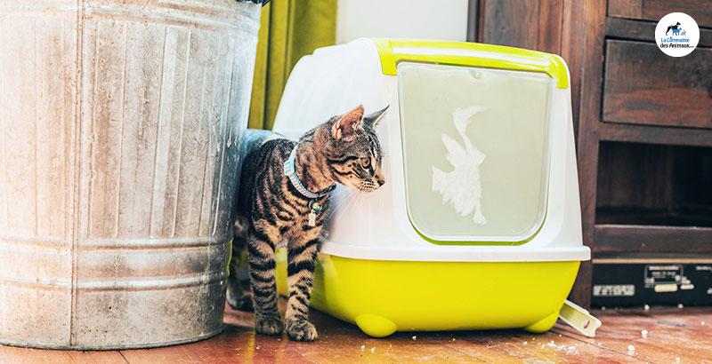 Comment choisir le bac à litière de son chat ?
