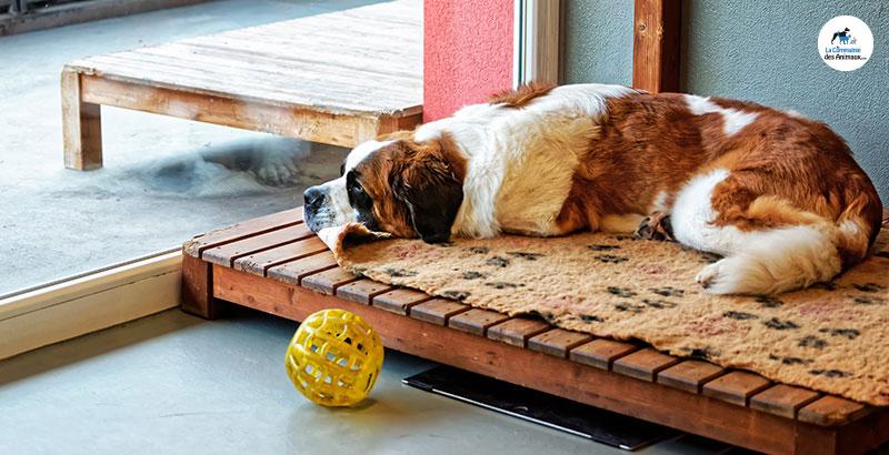 Vrai ou Faux : Un chien peut faire une crise cardiaque