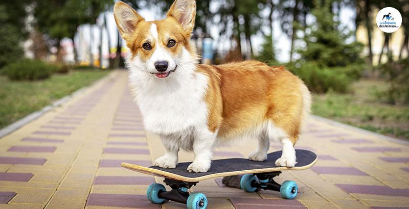 Quels accessoires choisir pour sortir son chien ?