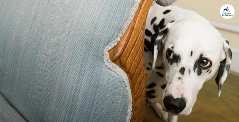 Feux d'artifice : Comment rassurer son chien ?