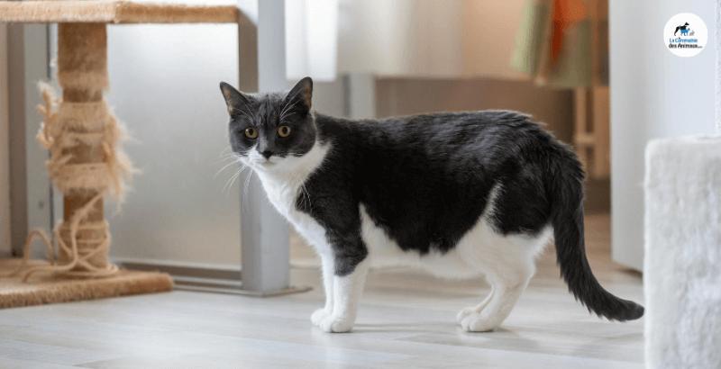 Comment faire garder son chat pendant les vacances ?