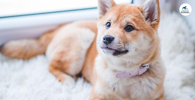 Comment apprendre à son chien à rester seul ?