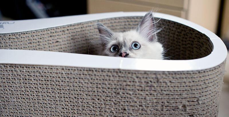 Faut-il punir un chat quand il fait une bêtise ?