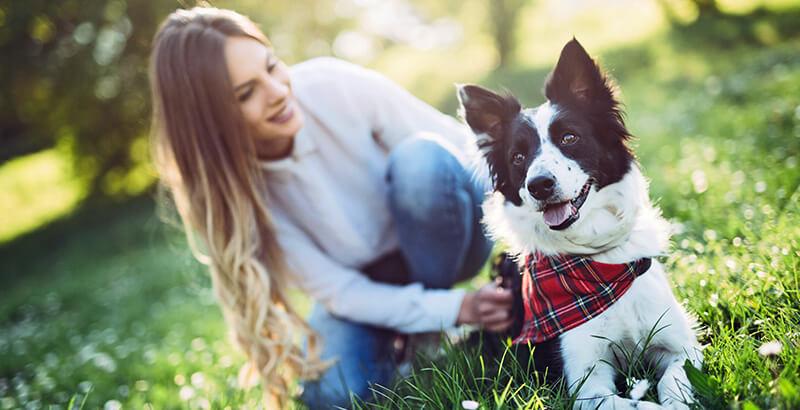 Dogteur, passionnément vétérinaire !