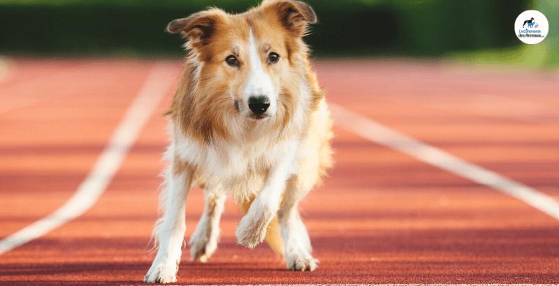 Déconfinement : Facilitez la reprise des activités sportives avec Flexadin Advanced