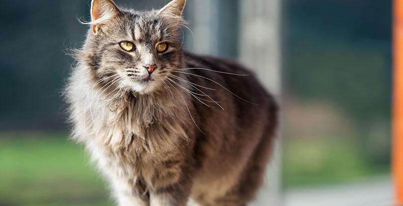 Quiz : Testez vos connaissances sur les antiparasitaires pour chat