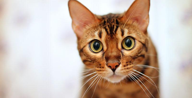 Quiz : Testez vos connaissances sur les chats