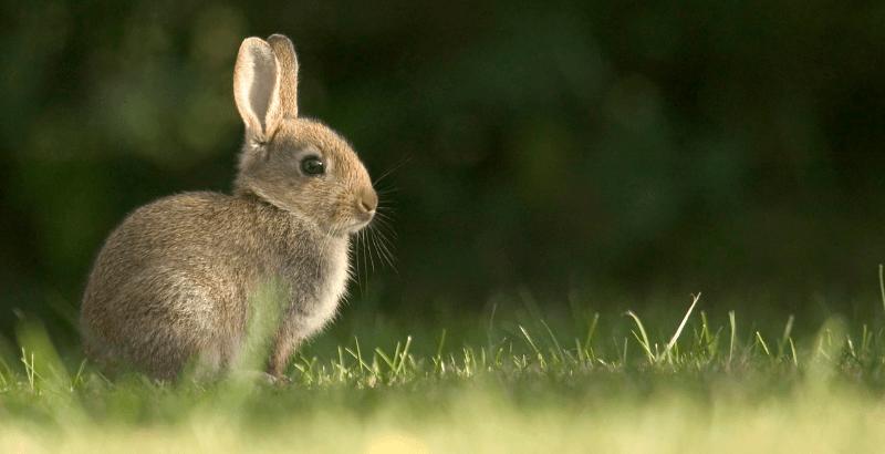 L'examen de santé du lapin