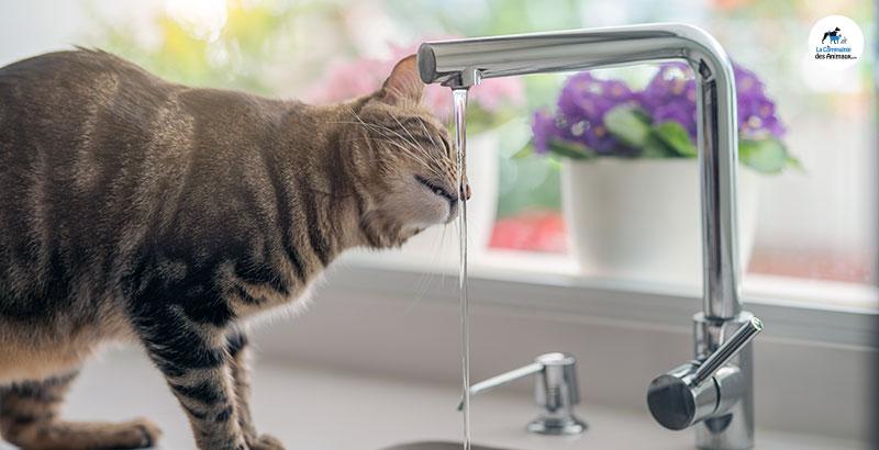 Quelle fontaine à eau choisir pour son animal ?