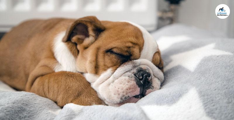 Le repos et le sommeil du chiot