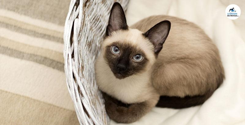 On a testé : Pet Phos Pelage pour chat