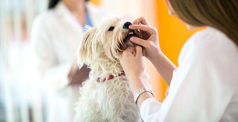 Quiz : Testez vos connaissances sur l'hygiène bucco-dentaire de votre animal