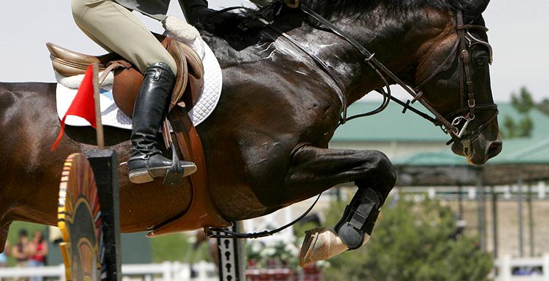 Bleimes et abcès chez le cheval