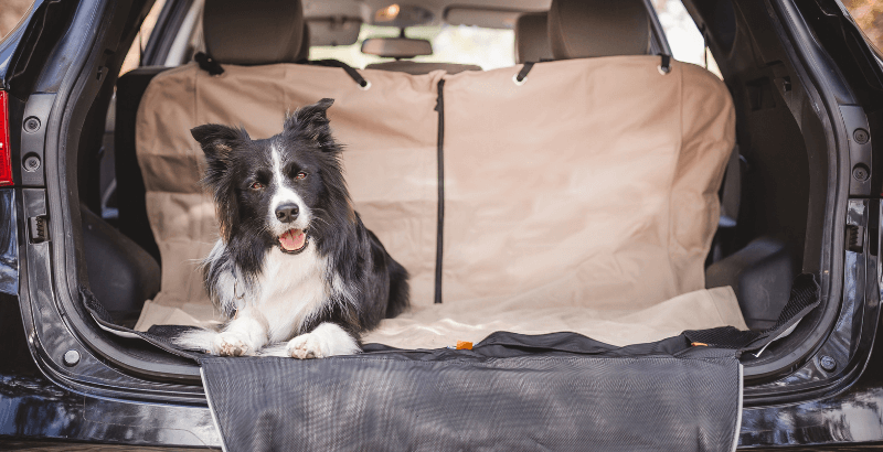 Quelle protection de sièges de voiture Kurgo choisir?