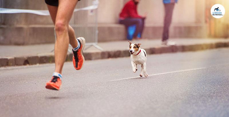 Canicross : Nos conseils pour courir avec son chien