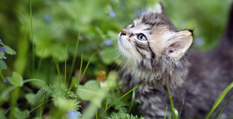 Pourquoi faut-il vermifuger son chaton ?