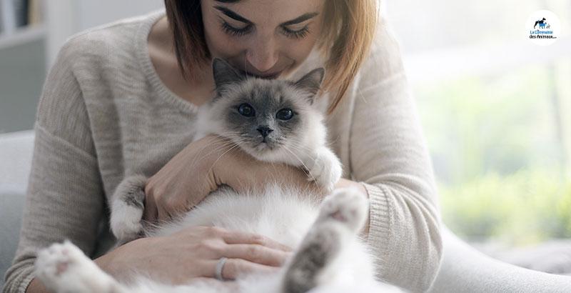 Pourquoi faut-il traiter son chat contre les puces ?