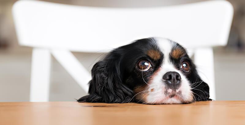 Comment fonctionne l'odorat chez le chien et le chat ?