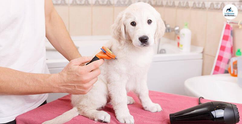 Quelle brosse choisir pour toiletter mon chien ?