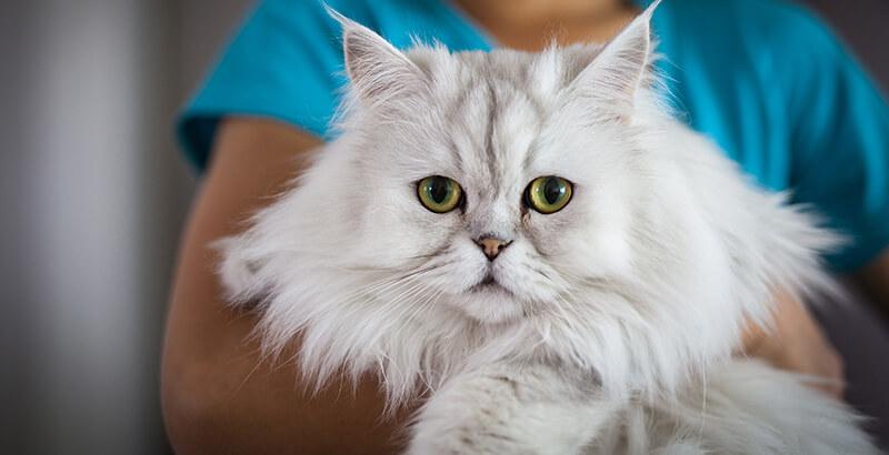 Les 5 indicateurs de santé chez le chat