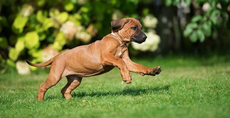 Cet été, protégez votre chien contre les tiques !