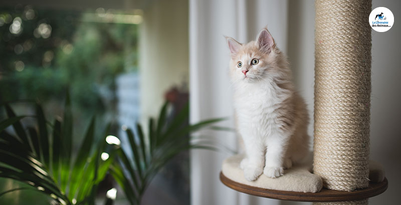 Comment choisir le griffoir pour son chat ?
