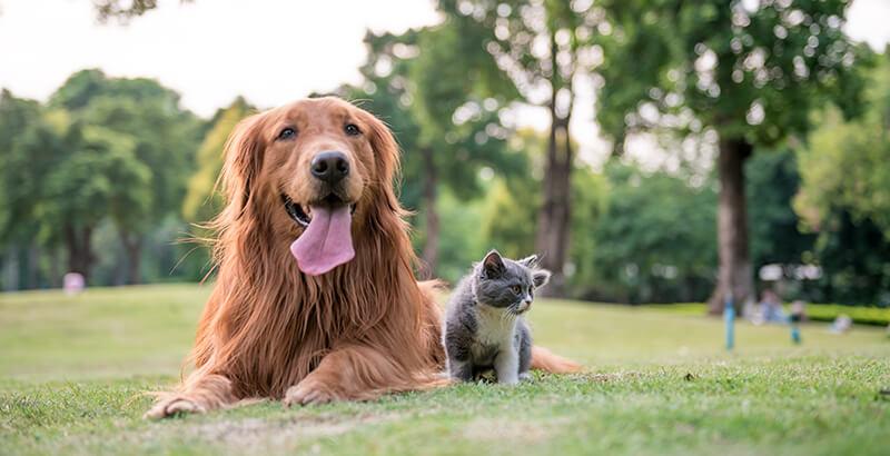Votre animal a-t-il une allergie alimentaire ?