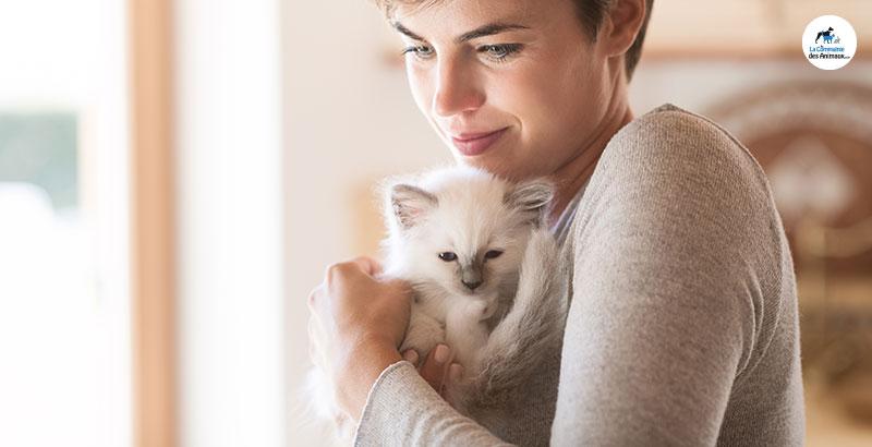 J'adopte un chat : Que faire avant, le jour J et dans les jours qui suivent ?