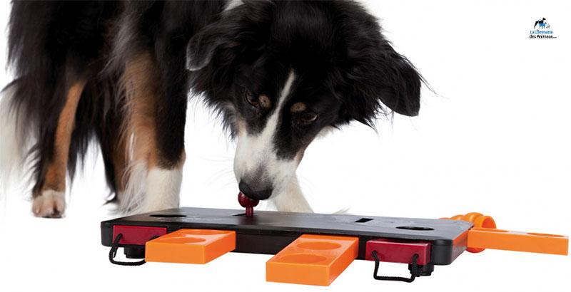Les jeux interactifs pour chien et chat