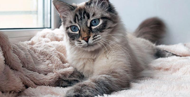On a testé : Le jouet Pipolino pour chat