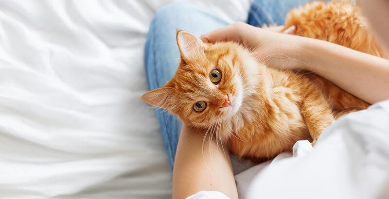 Mon animal de compagnie est jaloux, comment faire ?