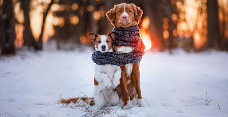 Comment savoir si mon chien a froid ?