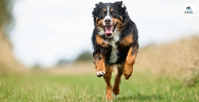 Quiz : Testez vos connaissances sur l'arthrose du chien